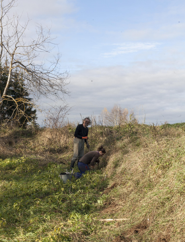 pflanzing