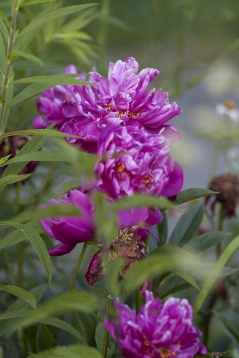 still from the old garden